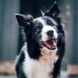 Zdjęcie ilustrujące psa